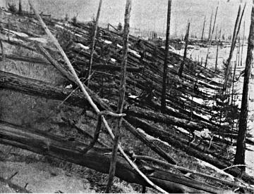 Resti della foresta di Tunguska